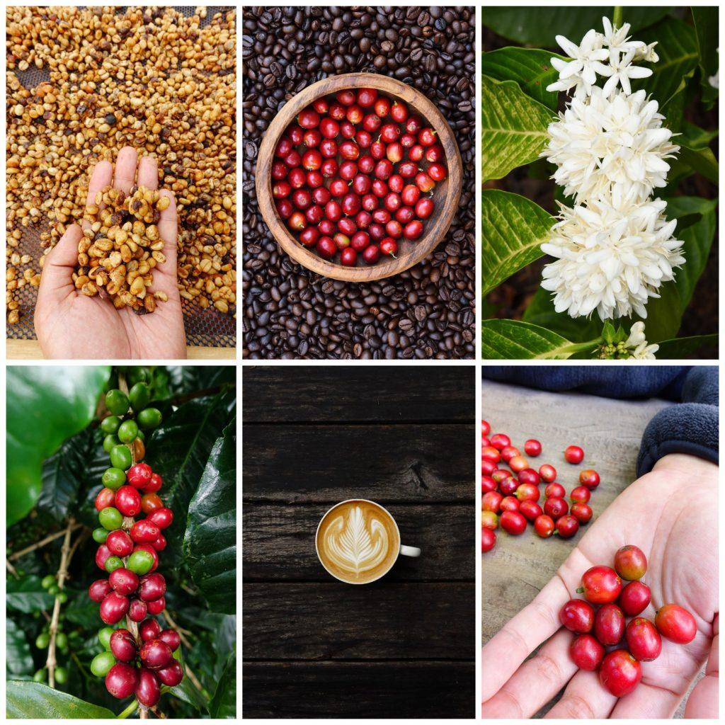 Celebrate Coffee in Woonsocket